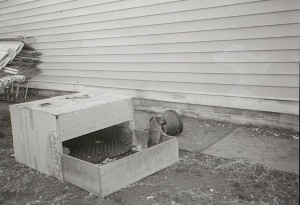 Puppy in a Box by Larry Spalding