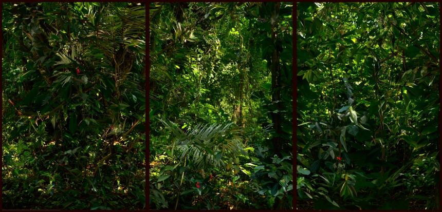 Botanic Garden, Rio de Janeiro, 2012 - by Albano Afonso