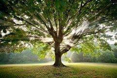 Cherokee Sun Tree - by Bob Hower
