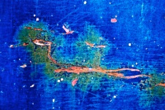 """Sea Serpent"" by: Sheri Wright"