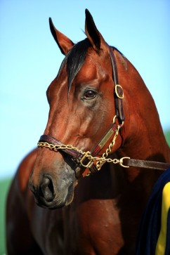 American Pharaoh - by Ted Tarquinio