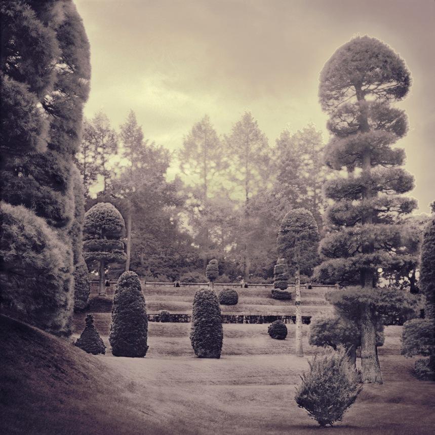 Hunnewell Arboretum III - by Nori Hall